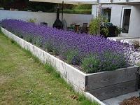 Skab rum i haven med højbede, her tilplantet med lavendel