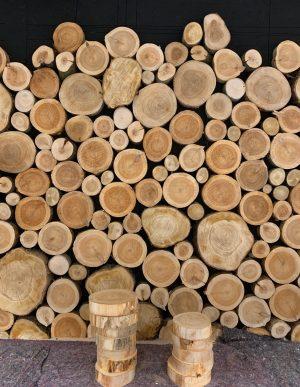 skiver i forskellige træsorter